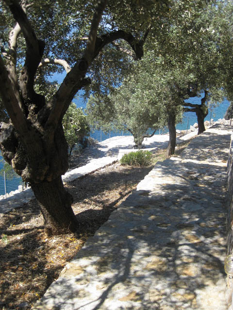Olive Grove Alonnisos